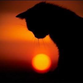 IL PETLOSS: Il dolore per la morte del nostro animale domestico